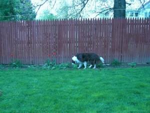 Sure. Walk in the garden.